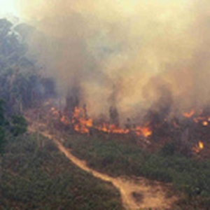 Protégeons l'Amazonie ! Non à l'accord de libre échange entre l'UE et le Mercosur