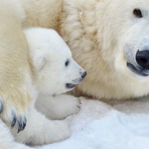 Total détruit l'Artique... grâce à nos impôts !