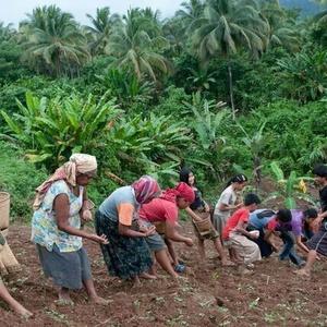 Philippines : ne sacrifiez pas la forêt de Palawan !